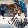 Up to 44% Off a Hands-On Falconry Experience