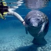 55% Off a Manatees Tour in Crystal River