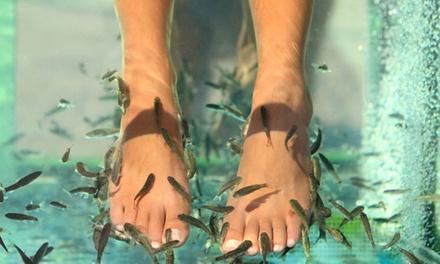 Fishpedicure et thé offert avec en option modelage des pieds et/ou soin hydratant dès 15 € à l'Institut Spot Bien-Être