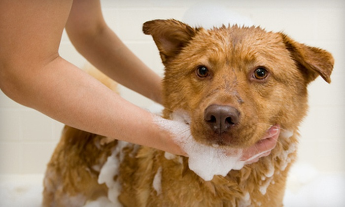 Noble Dog Shoppe & Spa - Howell: $40 Worth of Dog Grooming