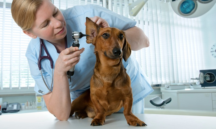 Mobile Vet Express - Westchester County: $294 for $535 Worth of Pet Care — Mobile Vet Express