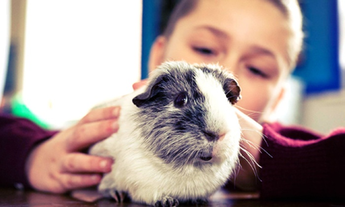 Pawsitively Pets For Kids - Leaside: Preschool, Afterschool, or Weekend Animal-Care Program at Pawsitively Pets For Kids (Half Off)