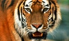 Austin Zoo - Rawhide Ridge: Visit for Two or Four to Austin Zoo (Up to 44% Off)
