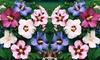 3 ou 6 Hibiscus 4 variétés 40-50cm