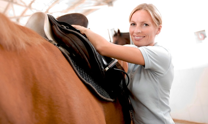 MD Barrel Horses - Mesquite: Three, Five, or Ten One-Hour Horseback-Riding Lessons at MD Barrel Horses (Up to 52% Off)