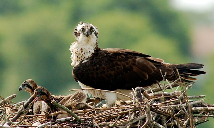 Birding By Boat on the Osprey - Cape May: Wetlands Wildlife Safari for Two or Four from Birding By Boat on the Osprey (Up to 48% Off)