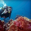 Up to 55% Off Scuba Class or Birthday Party