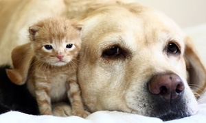 Nob Hill Animal Clinic: $23 for a Wellness Exam for a Cat or Dog at Nob Hill Animal Clinic ($93 Value)