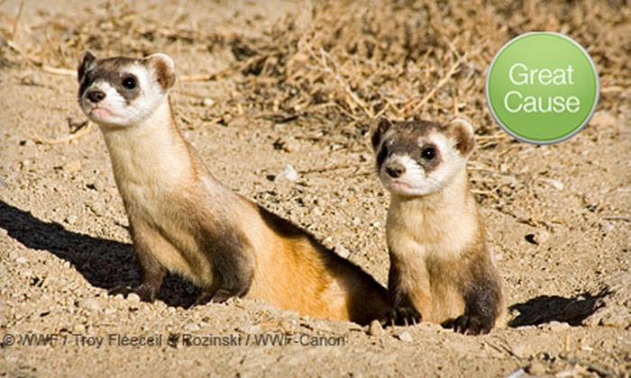 World Wildlife Fund - Mexico City: $10 Donation to Vaccinate Endangered Ferrets