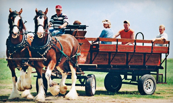 Livermore Wine Carriage - Livermore-Pleasanton: Carriage-Led Wine-Tasting Tour with Picnic Lunch for One, Two, or Four from Livermore Wine Carriage (Up to 58% Off)