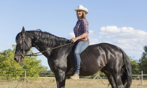 Perry Performance Horses: Two Horseback-Riding Lessons at Perry Performance Horses (65% Off)
