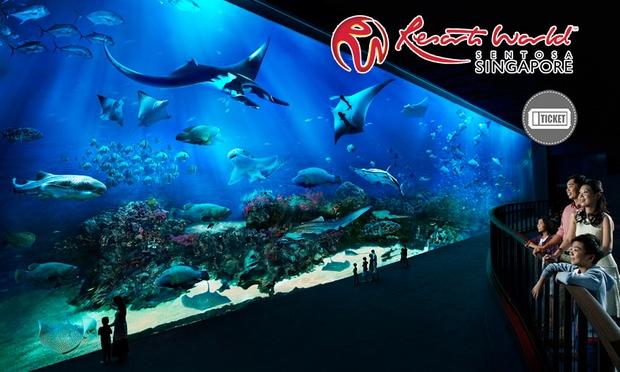 S.E.A. Aquarium & Adventure Cove 0