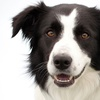 Up to 48% Off Healthcare Packages for a Dog or Cat