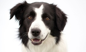 Chesterfield Veterinary Center: Physical Exam for Dog or Cat with Optional Vaccines or Dental Cleaning (Up to 48% Off)