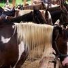 Up to 60% Off Horseback Riding at Jayell Ranch