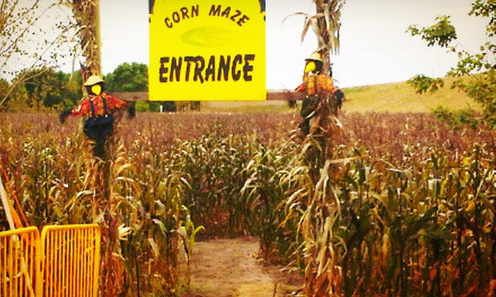 101 Market - 101 Market: $19 for Two WeeBee Pumpkins and Fall Festival and Corn Maze for Four at 101 Market ($42 Value)