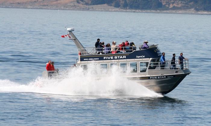 Five Star - Victoria: C$69 for a Three-Hour Wildlife/Whale Watching Tour from Five Star Whale Watching Ltd. (C$105 Value)