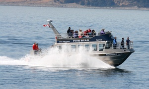 Five Star: CC$69 for a Three-Hour Wildlife/Whale Watching Tour from Five Star Whale Watching Ltd. (CC$105 Value)