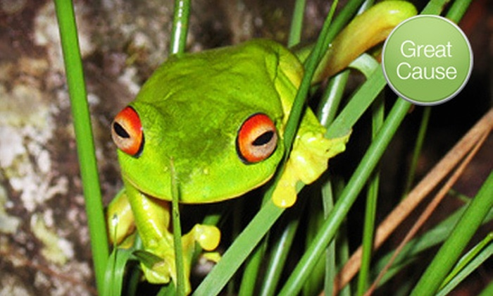Save the Frogs!: $10 Donation to Save the Frogs!