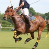 37% Off Polo Lessons at Green Acres Polo