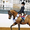 14% Off Lessons at Bay Area Equestrian Center