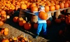 Abbey Farms of Marmion Abbey - Aurora: Pumpkin-Patch Outing for Four or Six at Abbey Farms of Marmion Abbey (Up to Half Off)