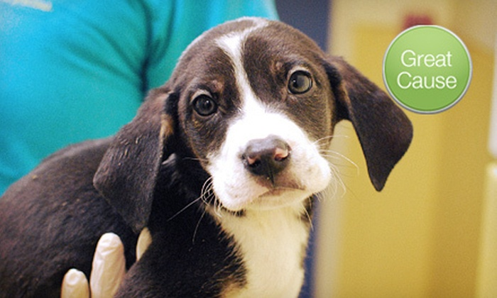 Richmond SPCA: $10 Donation to Help Vaccinate Animals at a Shelter