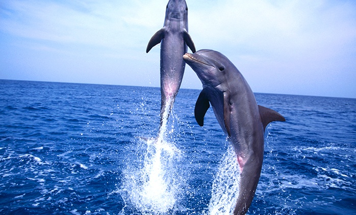 Bali, Denpasar: One-Day Dolphin and Sightseeing Tour with Hotel Transfers and Breakfast with Sabatani Ways