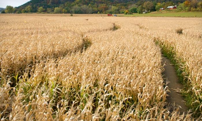 Stratton's Wynnorr Farm - Westtown: Corn-Maze Outing for Two, Four, or Six at Stratton's Wynnorr Farm (Up to 63% Off)