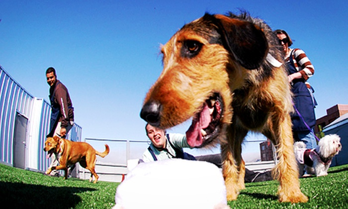Wag Hotels - San Francisco: Five Days of All Day Play or Five-Week Dog Training Course at Wag Hotels (Up to 51% Off)