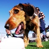 Up to 51% Off Doggy Daycare or Training Course
