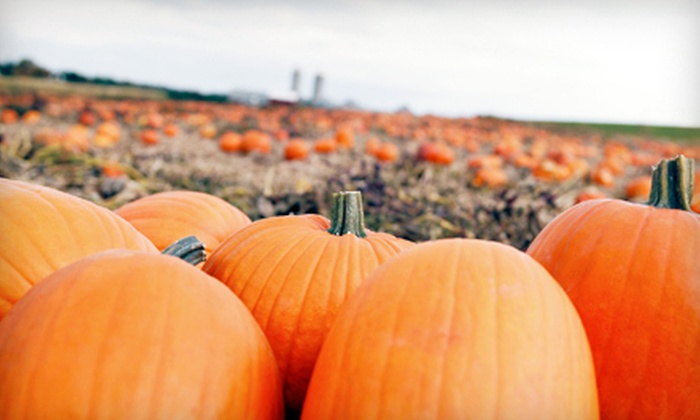 Axdahl's Garden Farm & Greenhouse - Grant: Haunted Trail or Pumpkin Patch and Hayride at Axdahl's Garden Farm & Greenhouse (Half Off). Five Options Available.