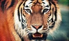 Austin Zoo - Rawhide Ridge: Visit for Two or Four to Austin Zoo (Up to 53% Off)