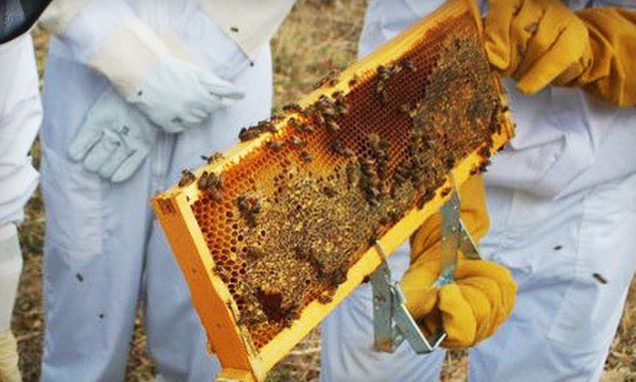 Round Rock Honey - Chisholm Trail Industrial Park: Introductory Beekeeping Class for One or Two at Round Rock Honey in Copper Canyon (Up to 68% Off)