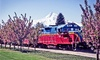 Mount Hood Railroad - Boring: 4.5-Hour Scenic Train Tour for Two People from Mount Hood Railroad (50% Off). 42 Options Available.