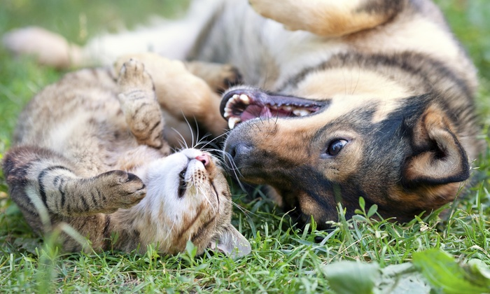 Happy Tails - Green Bay: $28 for $45 Worth of Pet Care — Happy Tails