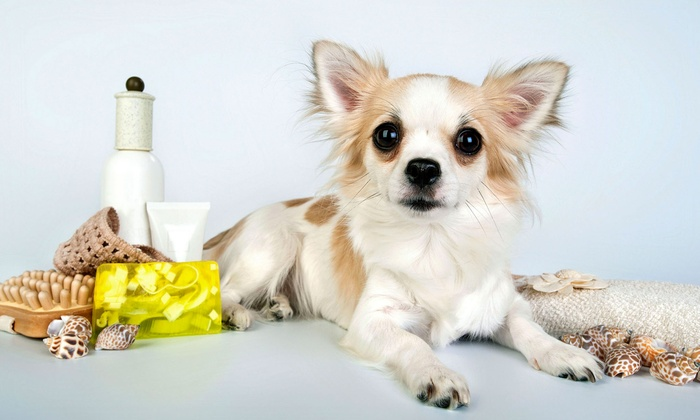 American Dog Club - Albertson: Dog Grooming for a Small, Medium, Large, or Extra-Large Dog at American Dog Club (Up to53% Off)