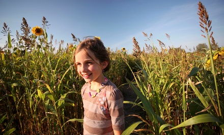 Four or Six Corn-Maze Trips and Hayrides at Fleitz Pumpkin Farm (Up to 50% Off)