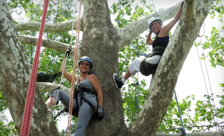 Tree-Climbing Adventure for Two or Four from EarthJoy Tree Adventures (Up to 51% Off)