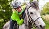 AMONTE - Massino Visconti (NO): 3, 5 o 7 lezioni di equitazione per adulti o bambini (sconto fino a 77%)