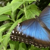 Up to 50% Off Cambridge Butterfly Conservatory Visit