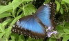 Cambridge Butterfly Conservatory - Grand River South: Visit for Two or Four to Cambridge Butterfly Conservatory (Up to 50% Off)