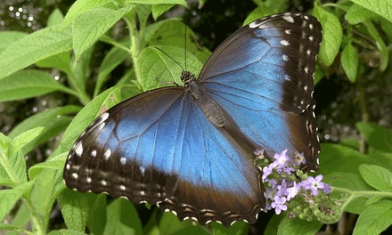 Visit for Two or Four to Cambridge Butterfly Conservatory (Up to 50% Off)
