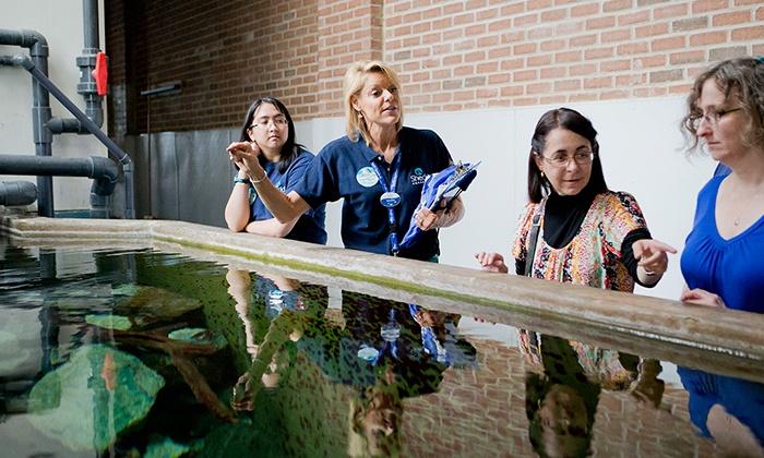 Shedd aquarium deals groupon