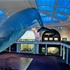 American Museum of Natural History – Up to 41% Off Membership