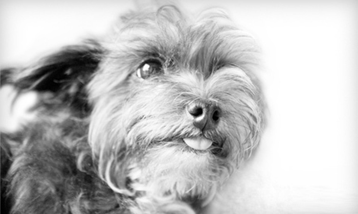 Joseph Braun Photography - Santa Barbara: $20 for a Pet Character-Portrait Package with Four Web-Ready Images from Joseph Braun Photography (Up to $250 Value)