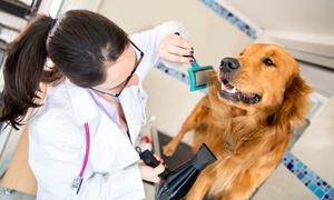 MENDEBALDEA DOGOS: Sesión de peluquería para perros pequeños, medianos o grandes desde 19,95 €