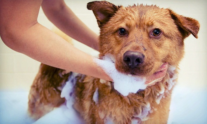 A Passion for Pets Daycare - Marietta: Dog Bath and Blueberry Spa Treatments at A Passion for Pets Daycare (Up to 74% Off). Six Options Available.