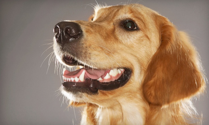 TNT Pet Services - Country Overlook: Grooming for a Small Dog, a Cat or Medium Dog, or a Large Dog, or $25 for $50 Worth of Pet-Sitting from TNT Pet Services