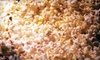 Popcorn Fharmacy - Central Oklahoma City: Popcorn Tin or $6 for $12 Worth of Flavored Popcorn at Popcorn Fharmacy